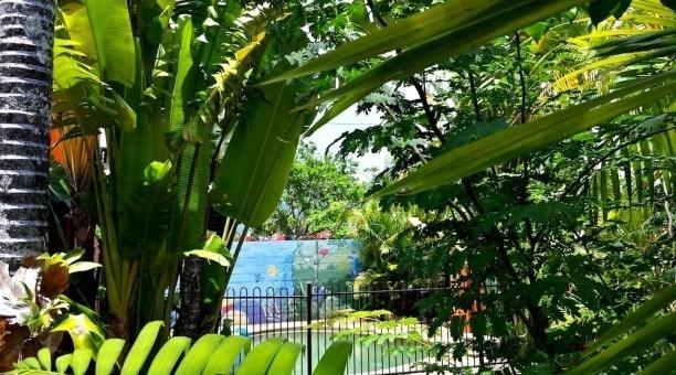 JJ's Backpackers green backyard