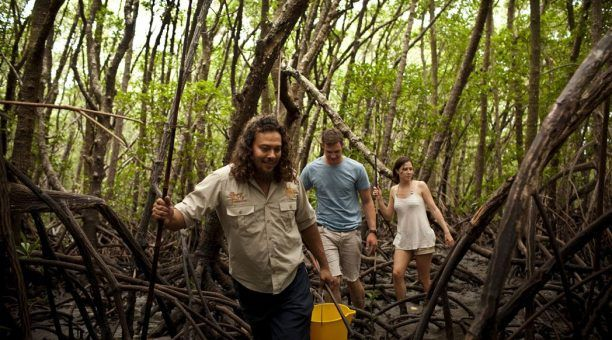 Walking through the Cooya Beach Mangroves