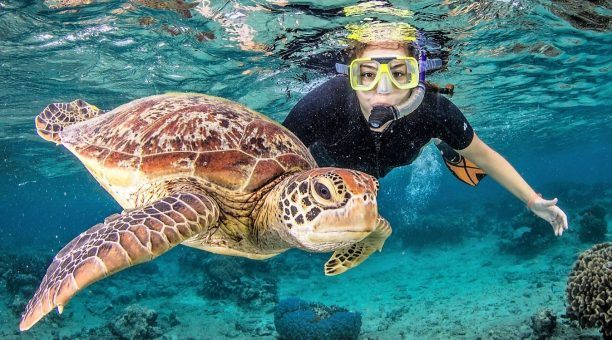 Snorkel with Turtle